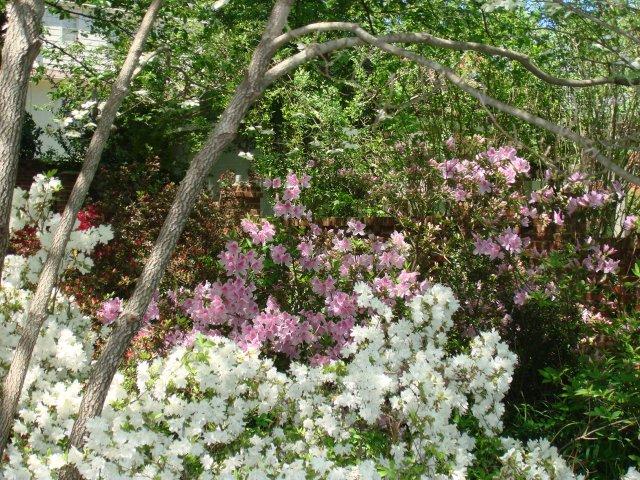 spring-flowers-002